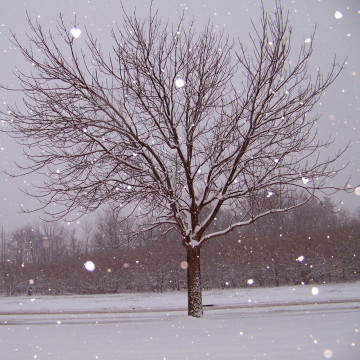 A photo of a tree next to tire tracks. It is snowing and everything is covered in snow.